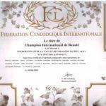 campionato_internazionale