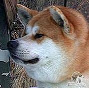 interviste_il cane